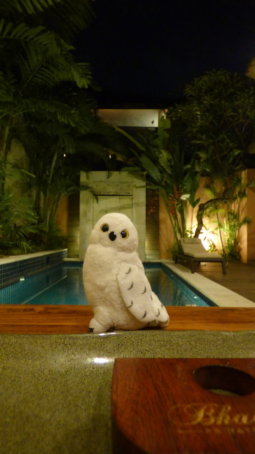 Owlface relaxes by the pool.
