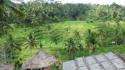 Rice Plantation near Ubud